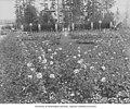Roses in Formal Gardens, Alaska-Yukon-Pacific-Exposition, Seattle, Washington, 1909 (AYP 1024).jpeg