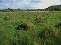 Rough grassland with ant hills, Inglestone Common - geograph.org.uk - 558505.jpg