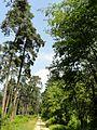 Saint-Jean-aux-Bois (60), route du Capitaine en forêt de Compiègne 4.jpg