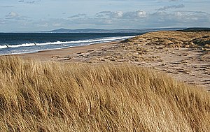 English: Sand Dunes by East Beach Some areas a...
