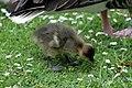 Sandringham 23-05-2011 (5761325530).jpg