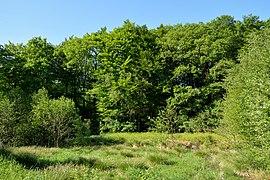 Schleswig-Holstein, Dithmarschen, Landschaftsschutzgebiet Gieselautal NIK 2905.jpg