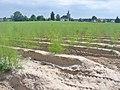 Schlunkendorf - Spargelfeld (Asparagus Field) - geo.hlipp.de - 39255.jpg