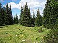 Schneeberg-pinewood47.jpg