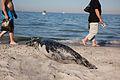 Seal 3 (6214584149).jpg