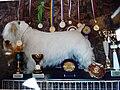 Sealyham terrier 1.jpg