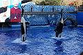 Seaworld-Orlando-Shamu-1553.jpg