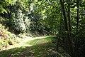 Selworthy, Allerford Plantation - geograph.org.uk - 547658.jpg