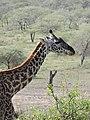 Serengeti 10 (14700653115).jpg