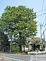 ShimoTomi-KataGawa Yakumo&Tenno-jinja 4.jpg