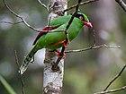 Фотография ярко-зеленой птицы с красными клювом и лапами и бордовыми крыльями, сидящей на ветке.