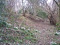 Snowdrops and Celandines on Footpath - geograph.org.uk - 131856.jpg