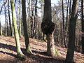 Sopot, Poland - panoramio (5).jpg