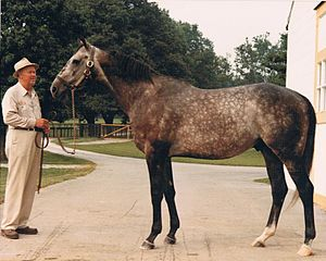 Spectacular Bid - Spectacular Bid at Claiborne Farm in 1981