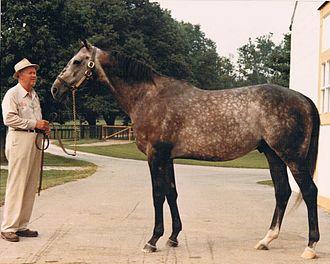 Spectacular Bid - Spectacular Bid at Claiborne Farm in 1981
