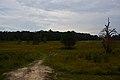 Spotsylvania Battlefield.JPG