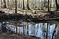 Spring creek 5 (6466594109).jpg