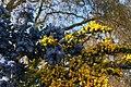 Spring in London (7173026876).jpg