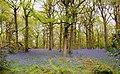 Springtime in Chaddesley Corbett woods (43963104031).jpg