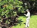 Starr-120522-6015-Anacardium occidentale-habit with Kim-Iao Tropical Gardens of Maui-Maui (24846336450).jpg
