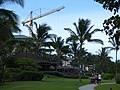 Starr-160621-0725-Clusia rosea-new condos Dukes Restaurant crane and coastal path-Kaanapali Beach Walk-Maui (27965221062).jpg