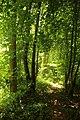 Steenbergse bossen 20.jpg