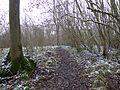 Stoke Wood Woodland Trust 1.jpg