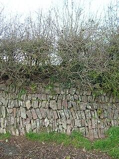 Devon hedge