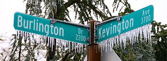 Icicle - Icicles gathered on a street sign in Eugene, Oregon