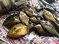 Sunfish of Michigan 2.jpg