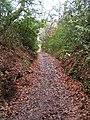 Sunken footpath, Redhill Common - geograph.org.uk - 106917.jpg