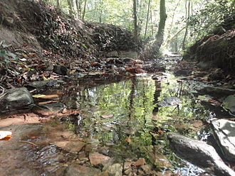 Swithland Wood and The Brand - Stream running through Swithland Wood