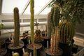 TU Delft Botanical Gardens 77.jpg