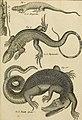 Tableau encyclopédique et méthodique des trois règnes de la nature - dédié et présenté a M. Necker, ministre d'État, and directeur général des Finances (1789) (14782075382).jpg