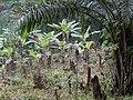 Tayap-Végétation (3).jpg