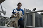 Team Kadena participates in Earth Day clean-up 160422-F-DD647-015.jpg