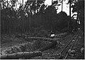 Tempestade de inverno de 1941 na Marinha Grande, e no Pinhal do Rei.jpg