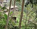 Tetallalang - Rice Paddies - panoramio (5).jpg