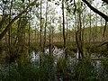 Teufelsbruch swamp next to crossing path in summer 18.jpg