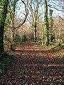 The Broad Walk bridleway, Ashling Wood - geograph.org.uk - 92257.jpg