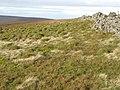 The Cumbria-Northumberland border - geograph.org.uk - 613285.jpg