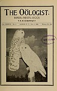 The Oölogist for the student of birds, their nests and eggs (1920) (14728354726).jpg
