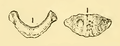 The Osteology of the Reptiles-116 uihguh uhgb juhg.png