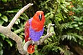 The Parrot of Indonesia.jpg