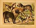 The animal kingdom (Plate XVII) (6129695577).jpg