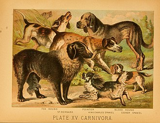 Dog breed - An 1897 illustration showing a range of European dog breeds