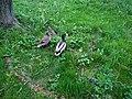 The couple of ducks 20210514 144700.jpg