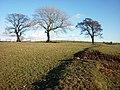 The footpath to Tatham - geograph.org.uk - 1732027.jpg