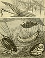"""The transformations (or metamorphoses) of insects (Insecta, Myriapoda, Arachnida, and Crustacea) - being an adaptation, for English readers, of M. Émile Blanchard's """"Metamorphoses, moeurs et instincts (14598109159).jpg"""