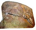 Ticinosuchus ferox 43.JPG